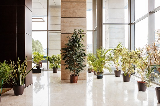 Green products for wood maintenance in commercial buildings